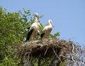 Free Ukraine. Storks Royalty Free Stock Image - 33613846