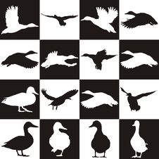Free Black And White Background With Mallards Stock Images - 33615384