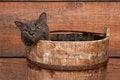 Free Gray Cat In Wooden Bucket Stock Photos - 33642173