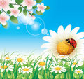 Free Floral Meadow Stock Photos - 33642383