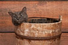 Free Gray Cat In Wooden Bucket Stock Photos - 33642173