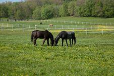Free Horses Stock Photos - 33650303