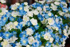 Free Fabric Daisy Stock Photography - 33657032