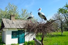 Ukrainian Country Yard With A Crane Nest Stock Images