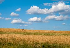 Free Horse Stock Image - 33661771