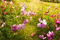 Free The Beautifull Gesang Flowers Stock Image - 33696341