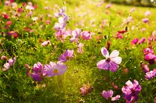 Free The Beautifull Gesang Flowers Stock Image - 33696341