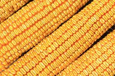 Free Dry Corn Detail Stock Photography - 33698852