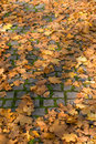 Free Autumn Leafs Royalty Free Stock Images - 3373039
