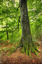 Free Forest In Early Autumn Stock Photography - 3375252