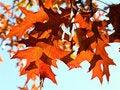 Free Autumn Leaves Royalty Free Stock Photos - 3377518