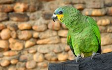 Free Green Yellow Parrot Royalty Free Stock Photos - 3370098