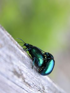 Two Bugs Stock Photography