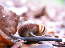 Snail In Forest Stock Photos