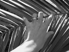 Free Hand Stock Image - 3370461