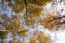 Free Crones Of Trees In Autumn Royalty Free Stock Images - 3371229