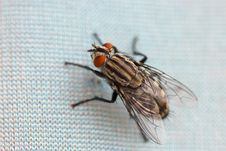 Free Macro Picture Of A Fly Stock Photo - 3371690
