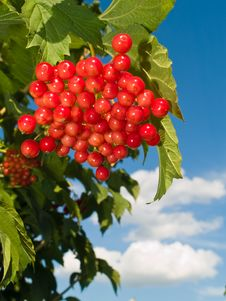 Free Rasin Berries Royalty Free Stock Photos - 3372348