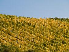 Free Vineyard In Franconia Royalty Free Stock Photos - 3372498