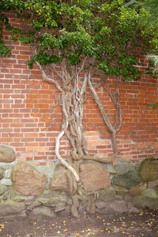Free Roots On Stones Royalty Free Stock Image - 3372896