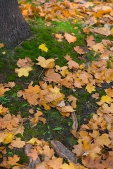 Free Autumn Leafs On The Moss Royalty Free Stock Photography - 3372917