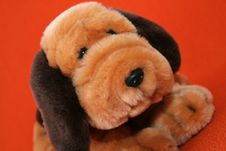 Free Plush Dog 2 Stock Photo - 3373380