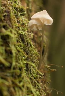 Free Mushroom Royalty Free Stock Photo - 3373455