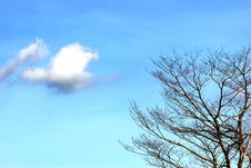 Free Small Cloud And Barren Tree Stock Photography - 3374432