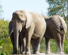 Free Trio Of Elephants Stock Photo - 3374850