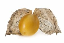 Free Physalis Fruit Stock Photo - 3374900