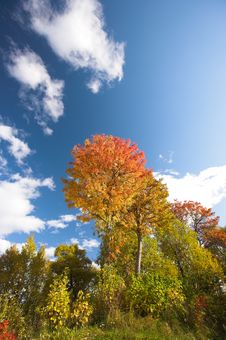 Free Forest In Early Autumn Royalty Free Stock Photo - 3375175