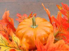 Free Autumn Harvest Pumpkin Stock Photo - 3377370
