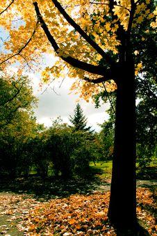 Free Autumn Colors Stock Image - 3377451