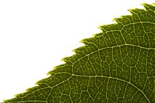 Free Green Leaf Edge Texture Royalty Free Stock Image - 3378166