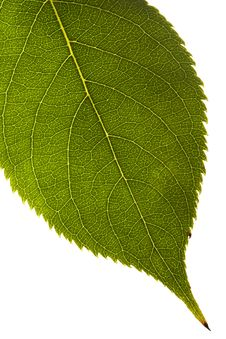 Free Green Leaf Texture Stock Photography - 3378282