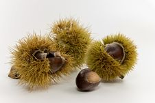 Raw Chestnuts.a Close Up Shot Stock Photos
