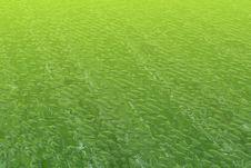 Free Green Water Stock Photos - 3378393