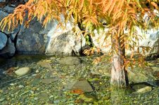 Autumn Tree In Water Stock Images