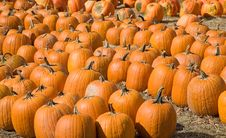 Free Pumpkin Patch Royalty Free Stock Images - 3379459