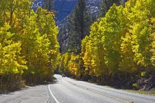 Free Road With Yellow Aspens Stock Photos - 3379683