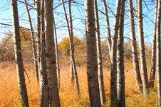 Free Autumn Beauty Royalty Free Stock Photo - 3379925
