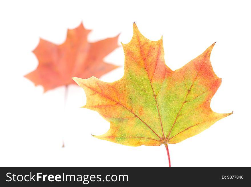 Autumn colors 12