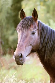 Free Horse Portrait Stock Photos - 33704003