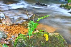 Tree And Moss On Stone In Stream Stock Photo