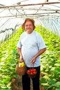 Free Elderly Man Vegetable Garden Stock Photo - 33728050
