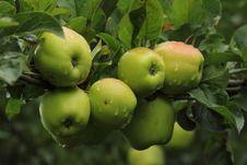 Free Apples Stock Photos - 33725803