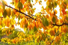 Free Autumn Leaves Stock Photo - 33727470