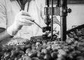 Free Cashew Nut Cracking Stock Image - 33736751
