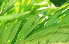 Free Tropical Leaves Background Royalty Free Stock Photography - 33733307
