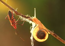 Free Snail And Insect Stock Images - 33736004